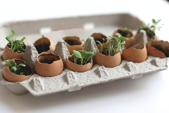 Recycling Eggs