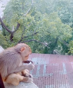 monkey spot