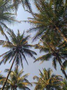 V resorts Wai sightseeing